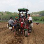 Planting at the Winery in Maryland-Linganore Winecellars